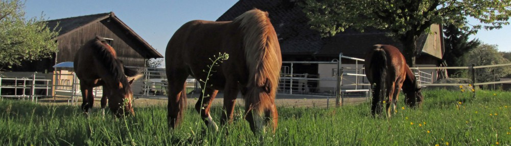 Pferdepension Golaten